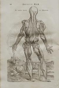 LEVELING, Heinrich Palmaz. Anatomische Erklärung der Original-Figuren von Andreas Vesal