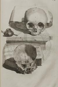 COWPER: Anatomia corporum humanorum